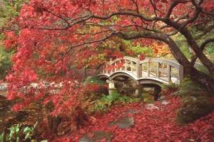 japanesegarden-colore
