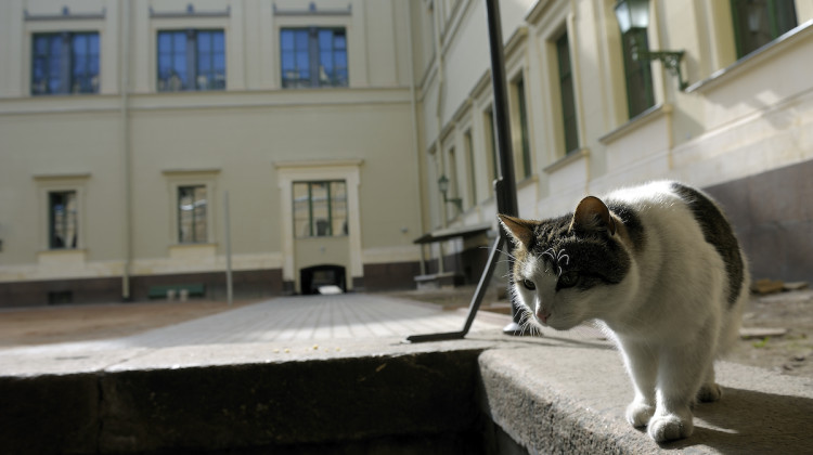 Apr 2009, San Pietroburgo: Hermitage Museum, cats © Gerald Bruneau / Grazia Neri