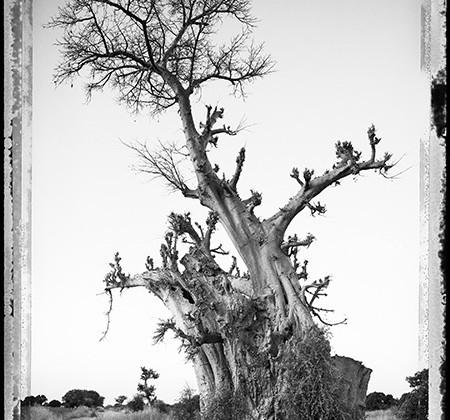 """Elaine Ling """"Baobab tree of generation"""""""