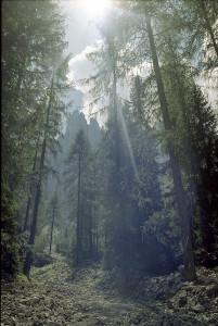 Bosco-di-abete-rosso-nei-pressi-del-Labirinto-del-Latemar-Carezza-Bolzano-Parco-naturale-dello-Sciliar-∏-Di-Biagio