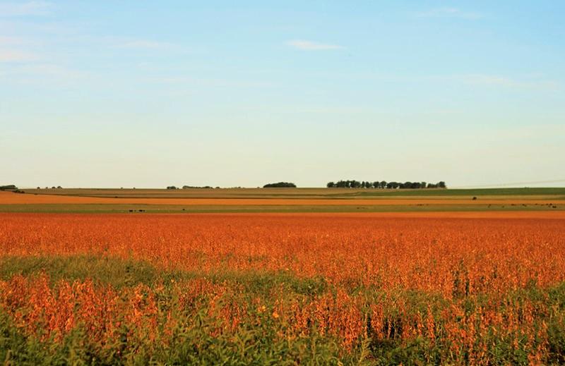 foto di Federico Alfani | una fattoria argentina