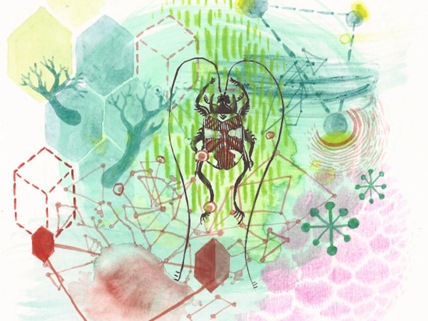 illustrazione di Valentina Gruer