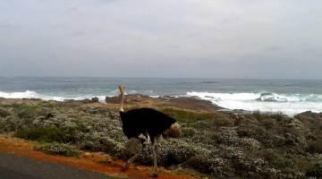 Cape Point, il promontorio all'angolo sud-est della Penisola del Capo