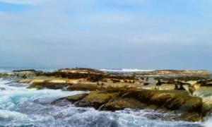 la colonia di foche di Duiker Island (Hout Bay)
