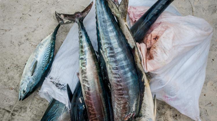 10-Simona-Ottolenghi-Seychelles-fishing-competition-the-trip-magazine