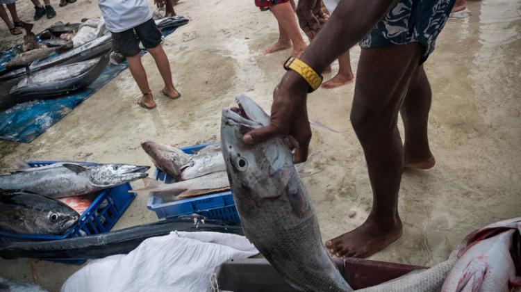 2-Simona-Ottolenghi-Seychelles-fishing-competition-the-trip-magazine