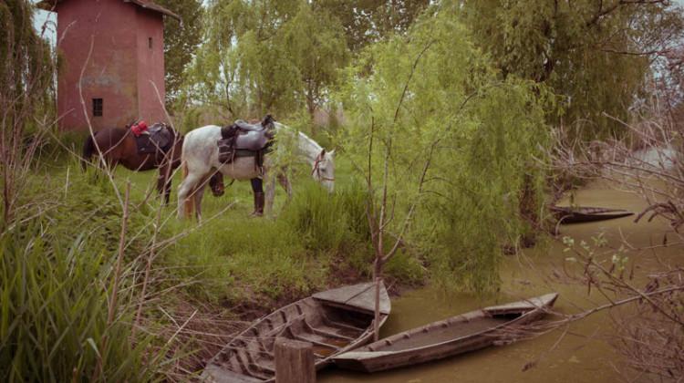 25 aprile   Cavalli in sosta vicino a un canale del Padule del Fucecchio