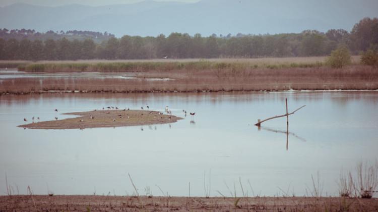 25 aprile 2015  Nel cuore del Padule, luogo di passaggio e nidificazione di molte specie di uccelli migratori