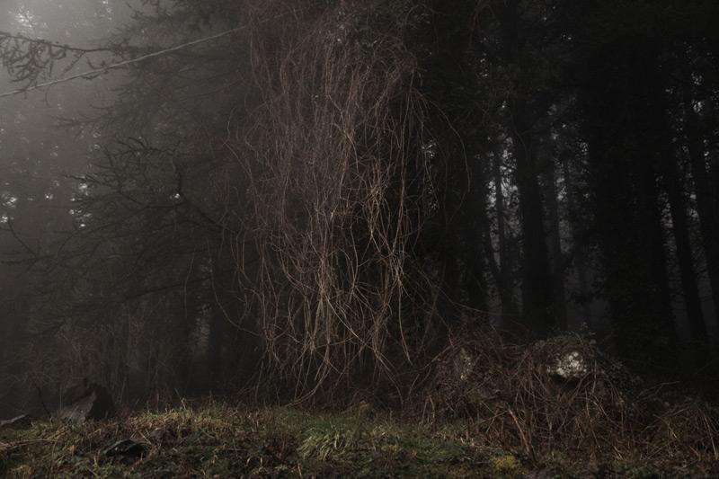 ombre-nella-nebbia-my-trip-cristina-vatielli-via-francigena-the-trip-magazine (1)