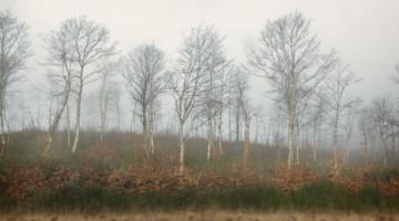 ombre-nella-nebbia-my-trip-cristina-vatielli-via-francigena-the-trip-magazine (2)