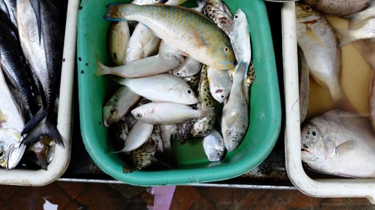 Banco del pesce nel mercato di Ton-Sai, fuori dalla zona turistica