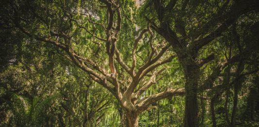 grande albero nel bosco