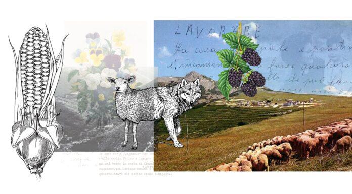 illustrazione mezzo lupo e mezzo agnello
